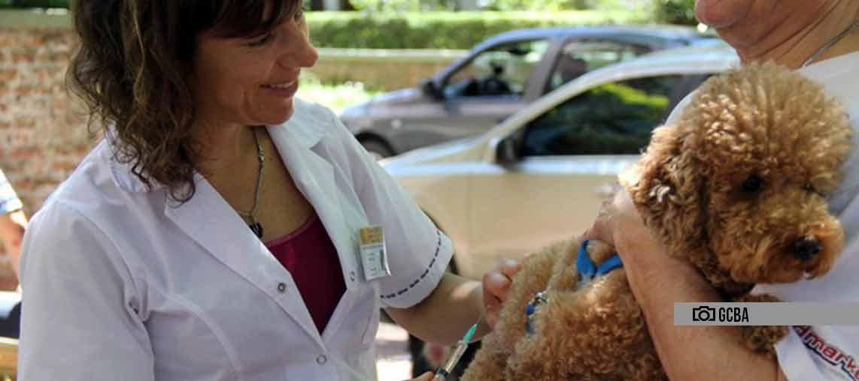 Se realizará la campaña de vacunación antirrábica en la Comuna 9