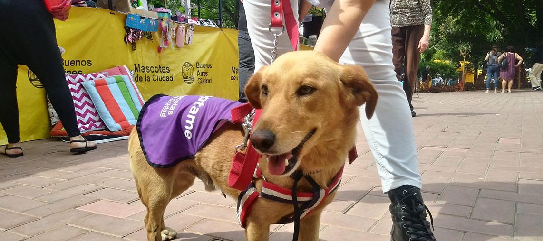 Atención veterinaria gratuita en Parque Avellaneda